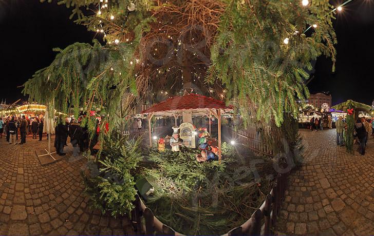 der weihnachtsbaum auf dem striezelmarkt in dresden. Black Bedroom Furniture Sets. Home Design Ideas